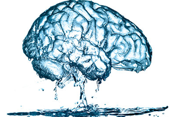 Facts About The Brain